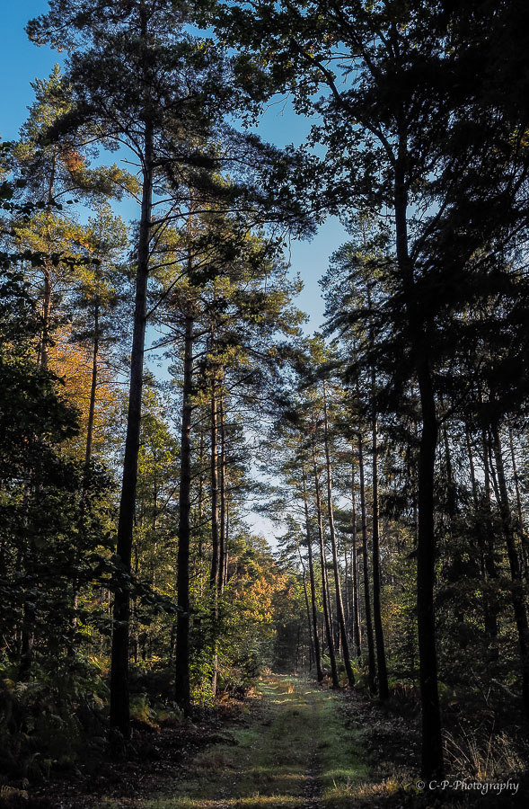 il n'y a pas que des champignons en forêt... 969746A230002