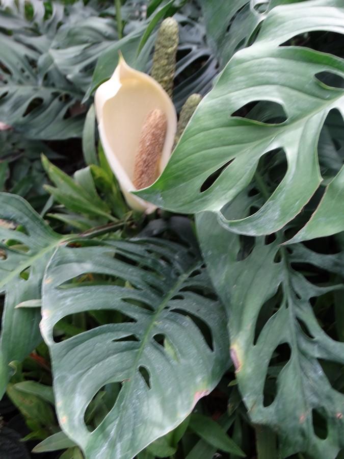[Fil ouvert] Fleurs et plantes - Page 6 970121030Copier