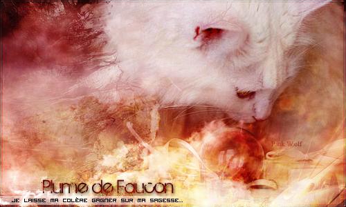 Gallerie d'un Loup Rôôse ♪♫ 971258Plume_de_faucon