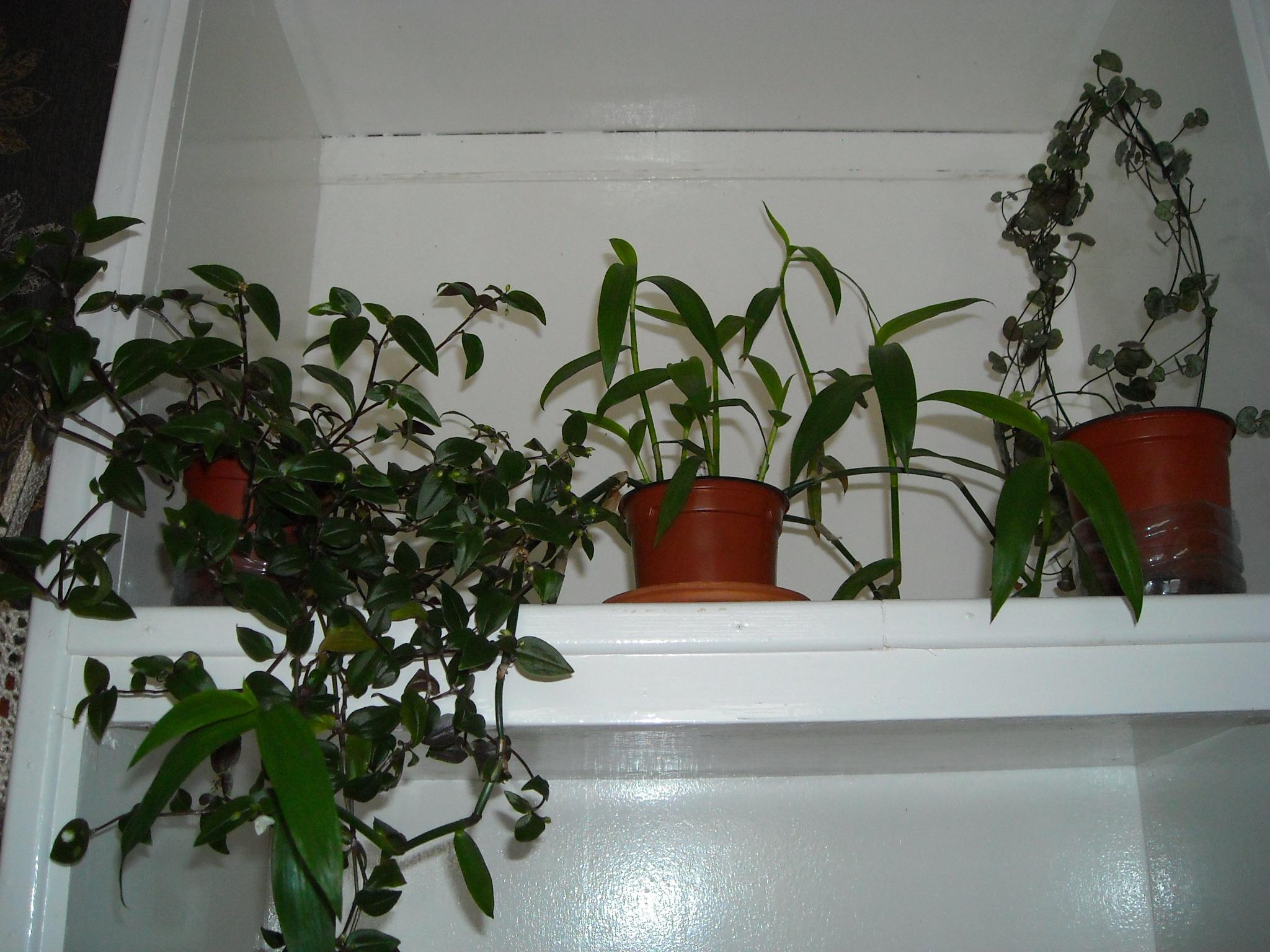 un aperçue de mon HLM 974472ensembledemesplantes002