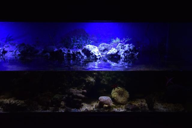 Le nouveau bac du Poissonpané : aquaterrarium de 900L / Nouvelle Calédonie - Page 2 975711DSC0078