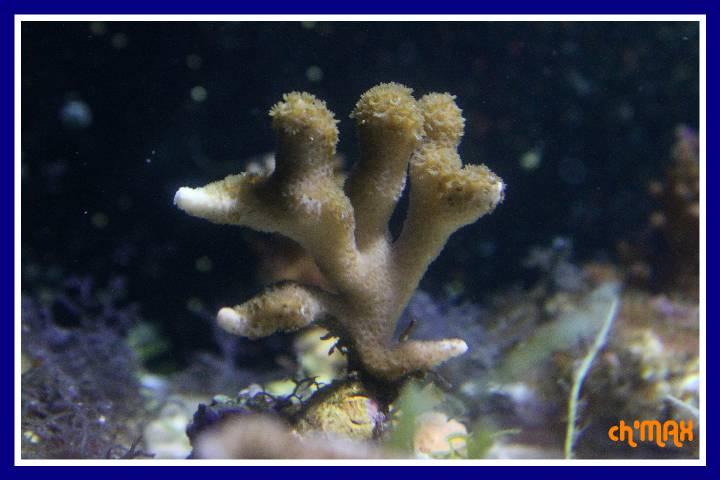 ce que j'amène en coraux a orchie  980319PXRIMG0044GF