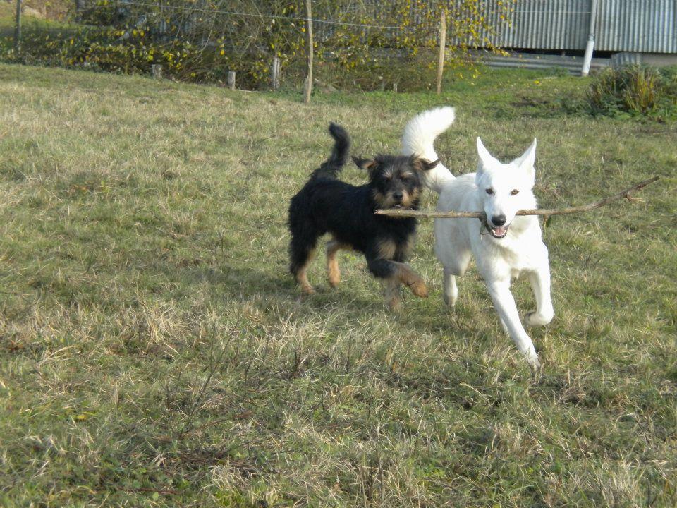 Urgence pour un chien croisé Griffon 983818email7