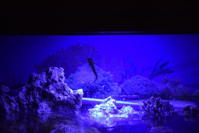 Le nouveau bac du Poissonpané : aquaterrarium de 900L / Nouvelle Calédonie - Page 2 988119DSC0244