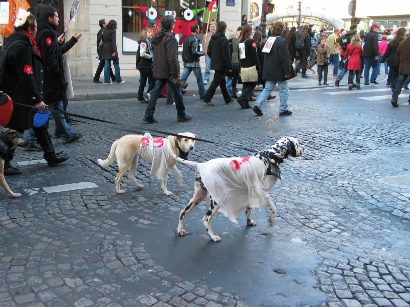 07 - Marche contre la fourrure - Paris 19 novembre 2011. 990727IMG6549