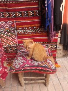 Essaouira.... 99173020120822131542