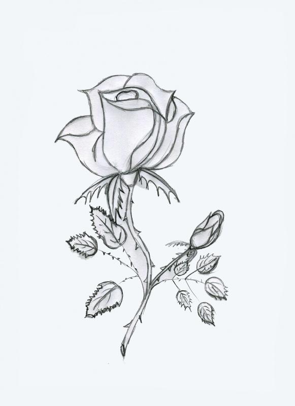 [EN PAUSE][Photoshop] Dessiner une rose 995354tape1croquis