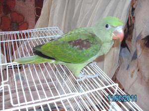 Mon bébé Grand alexandre Ruby !! Mini_119541PICT0212