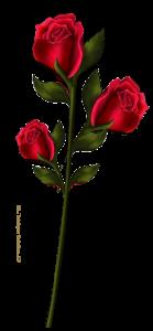 Fleurs Mini_163543ceflnd10b