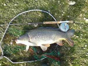 les autres poissons a la mouche  Mini_186597DSC00394