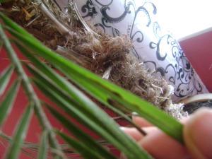 centre palmier tout sec Mini_209014DSC05869