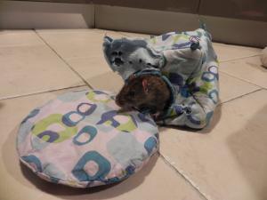 La douce retraite de Papy rat  Mini_237670DSCN7992