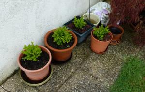 quelques plantouilles au jardin... Mini_300319556