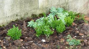 quelques plantouilles au jardin... Mini_310244985