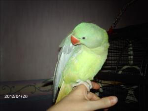 Mon bébé Grand alexandre Ruby !! - Page 4 Mini_398391IMAG0808