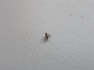 Besoins d'aide pour des mouches de terreau et moisissures Mini_440268P8230032