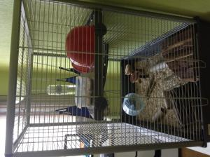 Avis sur ma cage Mini_448706IMG6170
