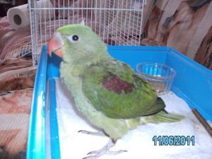 Mon bébé Grand alexandre Ruby !! Mini_459516PICT0192