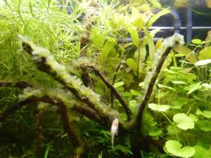 Pb d'algues depuis plusieurs semaines Mini_517689P1030189640x480