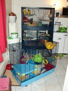 Cage freddy 3 + support [VENDUE à clôturer merci] Mini_520856CIMG4135