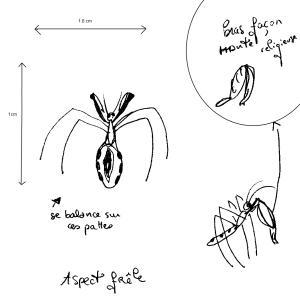 ( Empicoris sp. )Quel est cet insecte ? :3 Mini_546172Sanstitre