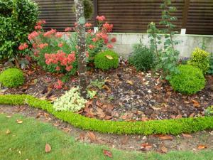 quelques plantouilles au jardin... Mini_562819214