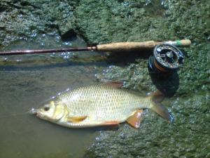 les autres poissons a la mouche  Mini_570608DSC00562