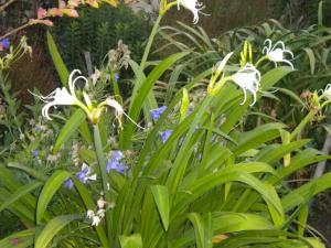 Le jardin, refuge de Marsouine Mini_584651DSCN6306