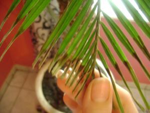 centre palmier tout sec Mini_725752DSC05864