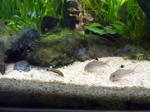 Pb d'algues depuis plusieurs semaines Mini_826358P1030231