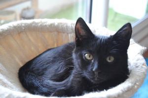Néji, chaton noir, né le 30/05/17 Mini_857508DSC0006