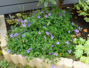 Ce 5 novembre au jardin... Mini_884724P1050194