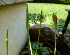Ce 5 novembre au jardin... Mini_886017P1050206