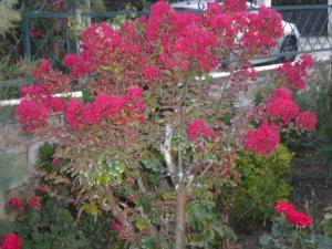 Le jardin, refuge de Marsouine Mini_894184DSCN6303