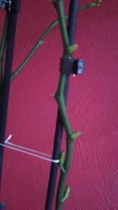 orchidée en détresse - Page 2 Mini_932191IMG20150510083541