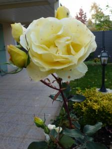 Ce 5 novembre au jardin... Mini_977548P1050199