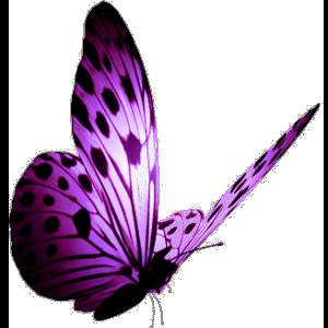 Tubes Papillon 117592Melgibson4ge17