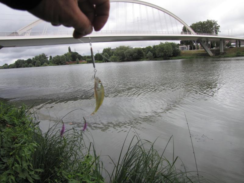 Open street fishing d'Angers - GN-CARLA - 25-08-2013 119084IMG1321