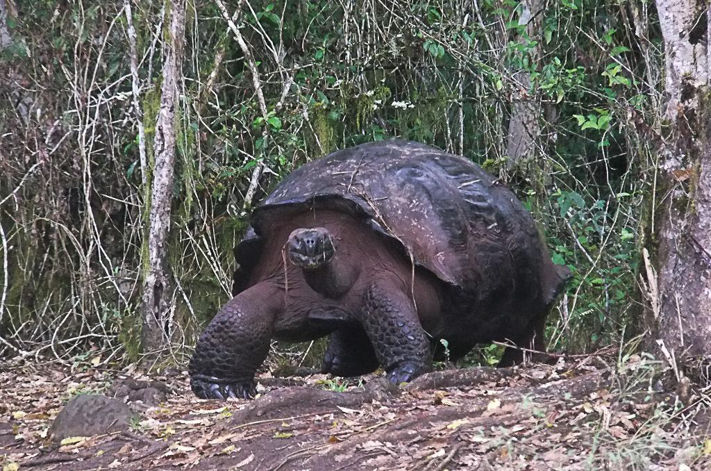 [Fil ouvert à tous] Reptiles, serpents, tortues, amphibiens, ... - Page 2 121255Galapagos969