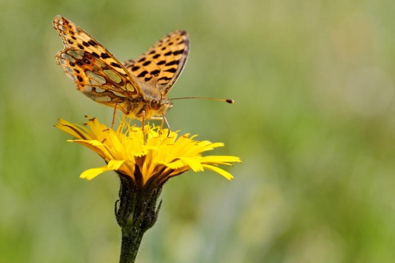 Flore et insectes de Vanoise 121793LelacBlanc036DxO800x600