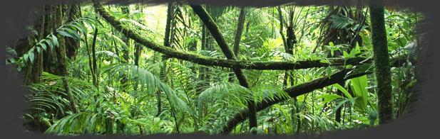 La Jungle Luxuriante