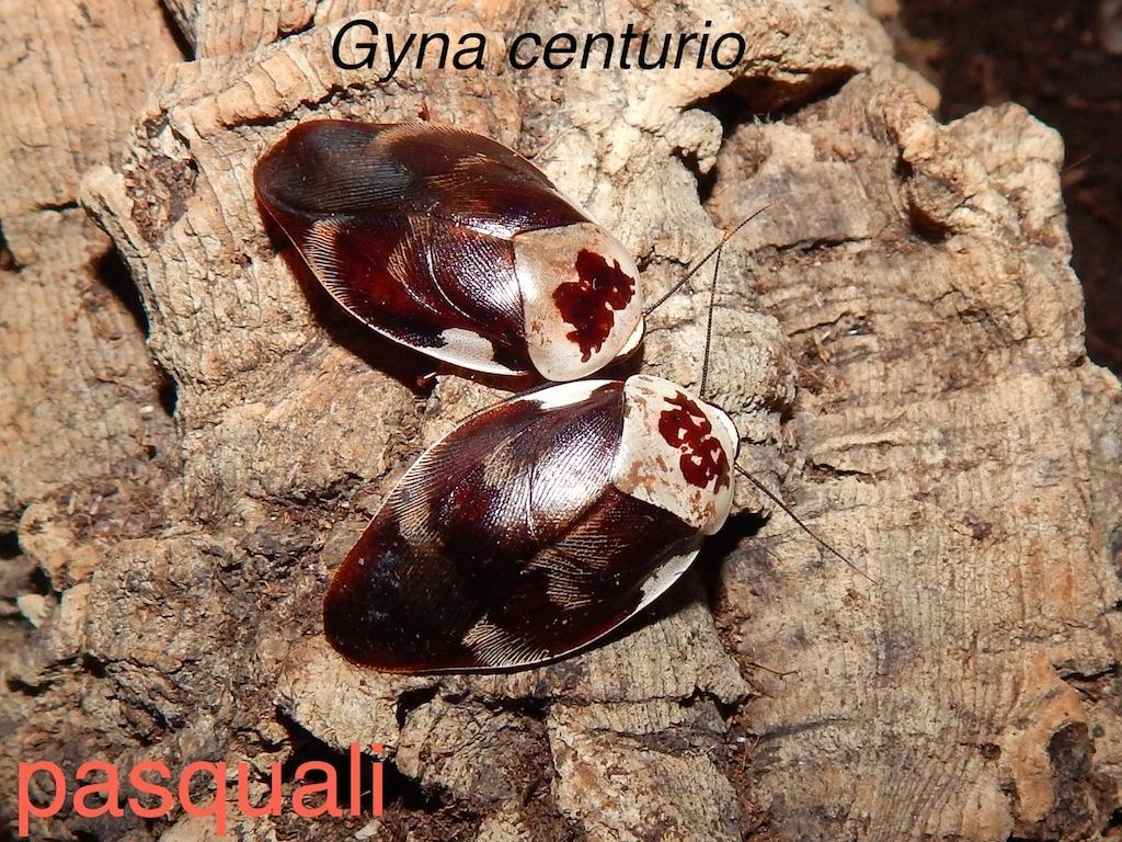 Quelques blattes. 125162RSCN0933