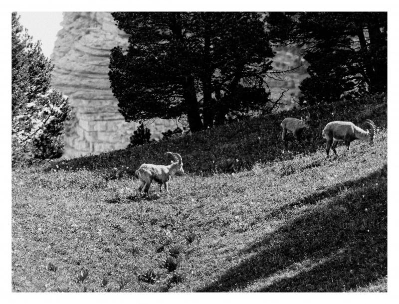 La faune du Pas de l'Aiguille 128130FJ8I4307web