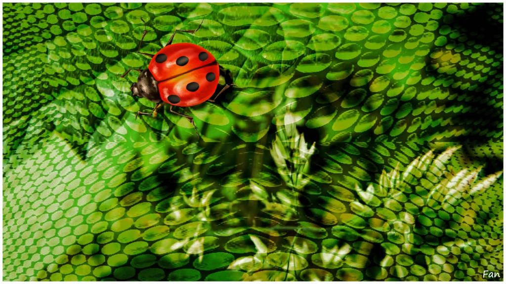 Fabrique d' IMAGES de Vagabonde (album:2) - Page 3 128808coccinelle