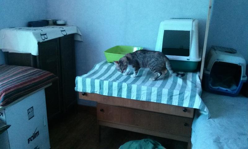 DUCHESSE - chatte femelle, née 2011/2012, borgne - (PASCANI) - adoptée par Chantal Pascal (dpt 63) - Page 2 1327761612