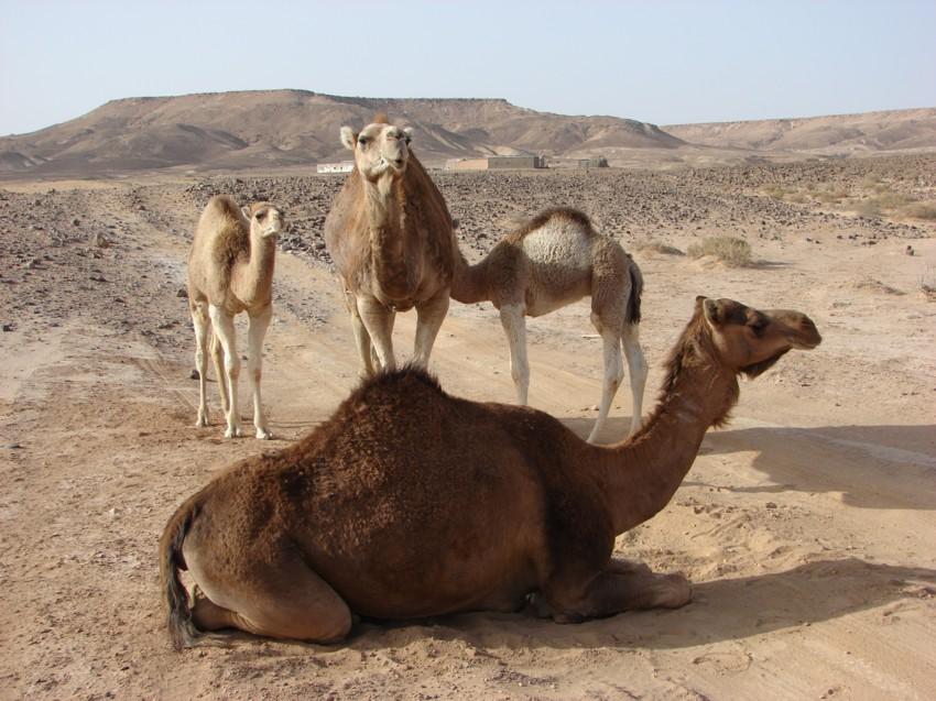 retour maroc avril 2013 133275021