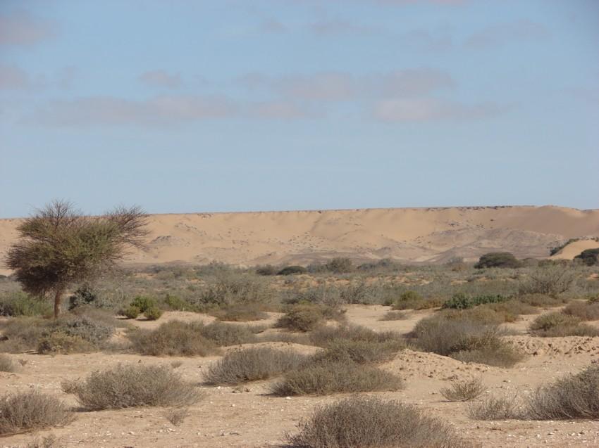 Le Grand Sud du Maroc - II 133810033