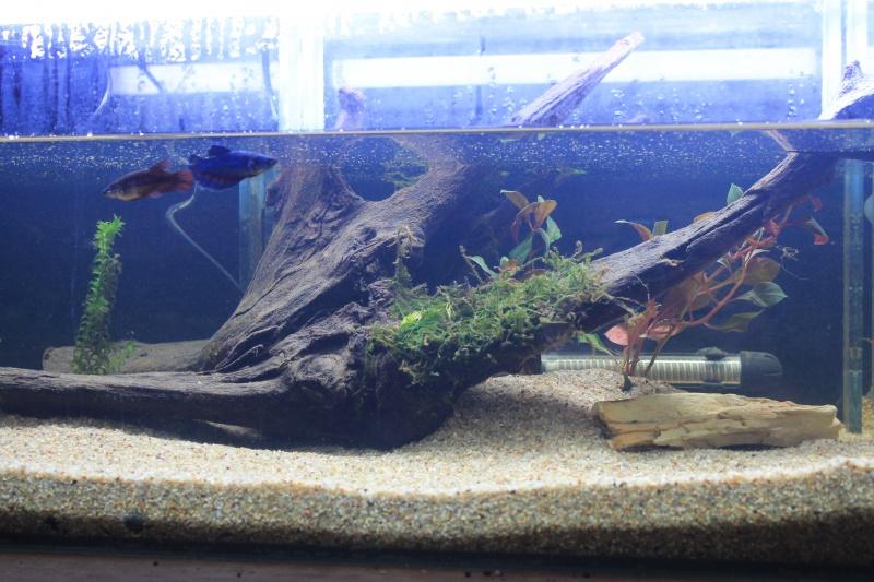 aquarium  100l pour mes femelles 134059ebay015