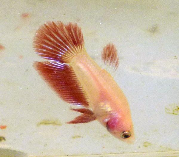 Reproduction mâle D et femelle HM 141023P1010173