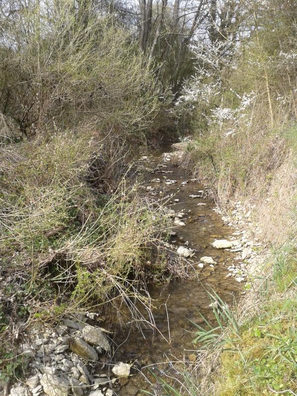 Spot près de Sarreguemines 14185420150413163335